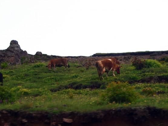 Zifinboğazı Yaylası- Golaşa-Araklı