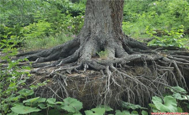 Ağacın tepesinde bir ilan