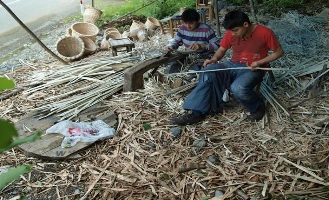 Fındık Odununu zona, zonu da sepete çeviriyor
