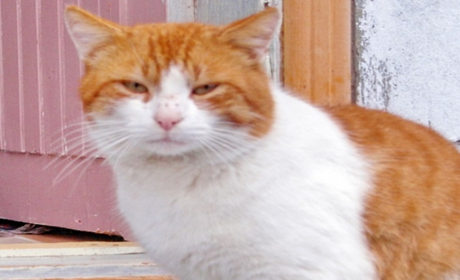 Bir kedinin tıraş öyküsü