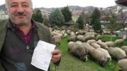 Yalan söyleyen çoban!