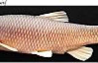 Üç yeni balık türü keşfedildi