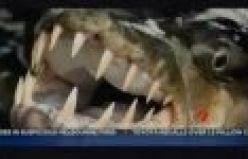 Piranha Canavar Balıklar