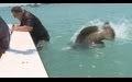 Güya Dev Balık Adam yemeye çalışıyor!