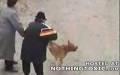 Bir köpek ve insanlar!