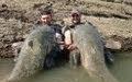 şokta iki dev balık