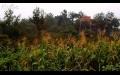 Zanike'de Yaz Yağmuru